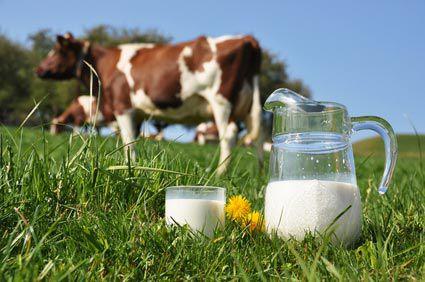 L'allergie au lait de vache  @